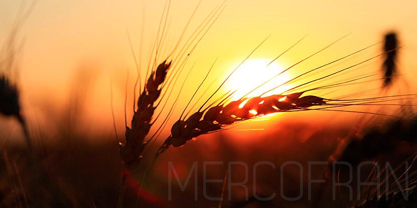 cotizacion cereales
