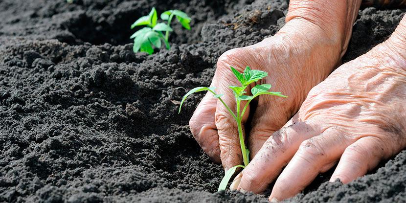 Consultoría educación agronómica